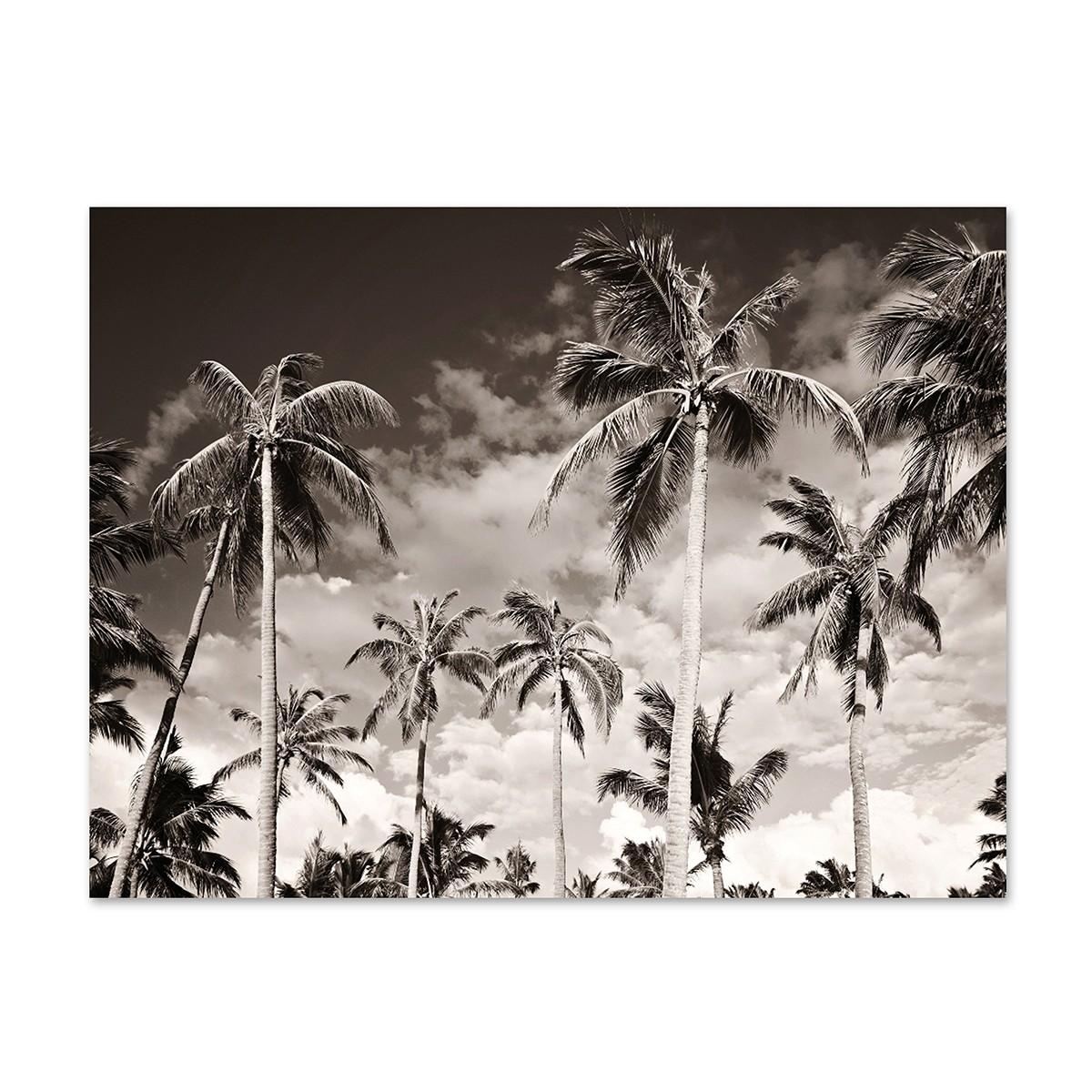 poster 39 palmen unter kalifornischem himmel 39 30x40 cm schwarz weiss motiv natur landschaft poster. Black Bedroom Furniture Sets. Home Design Ideas