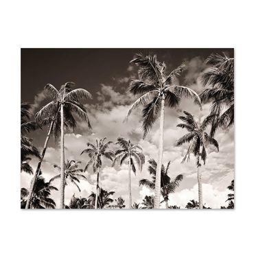 Poster 'Palmen unter kalifornischem Himmel' 30x40 cm schwarz-weiss Motiv Natur Landschaft