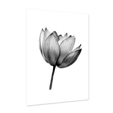 Design-Poster 'Lotus' 30x40 cm schwarz-weiss Motiv Natur Lotosblume