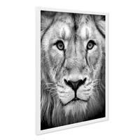 Poster mit Bilderrahmen Weiss 'Lion' 40x50 cm Natur Landschaft Design Löwe Afrika