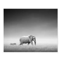 Poster 'Elefant' 40x50 cm schwarz-weiss Motiv Natur Landschaft Zebra Afrika Foto – Bild 1