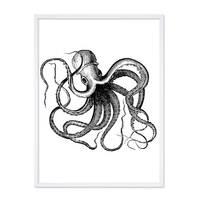 Poster mit Bilderrahmen Weiss Octopus 30x40 cm schwarz-weiss Motiv Krake Zeichnung