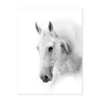 Poster 'Pferdekopf' 30x40 cm schwarz-weiss Motiv Pferd Foto