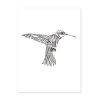Design-Poster 'Kolibri' 30x40 cm schwarz-weiss Motiv Vogel Zeichnung