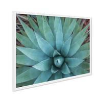Poster mit Bilderrahmen Weiss 'Agave' 30x40 cm Motiv Foto Naturbild Landschaft