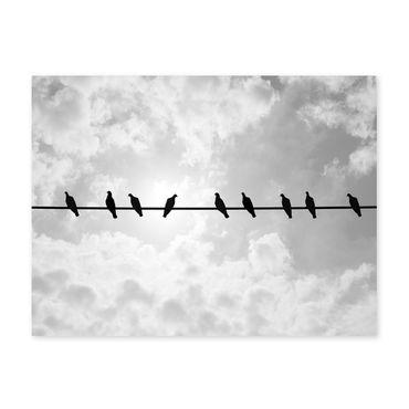 Poster 'Tauben' 30x40 cm schwarz-weiss Motiv Natur Vögel Foto Himmel