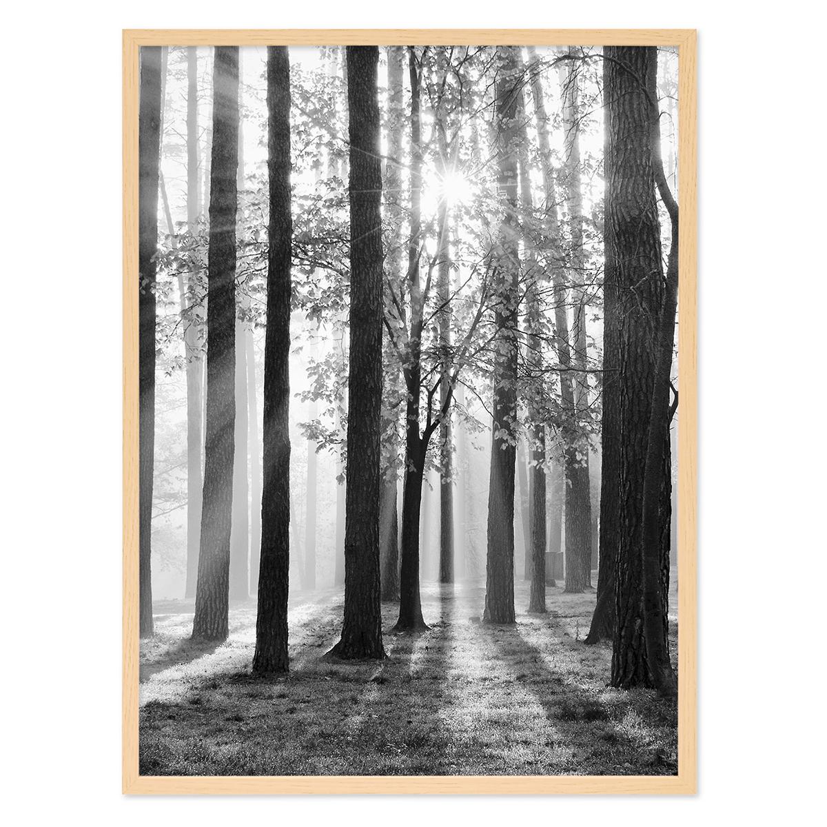 poster 39 wald sonne 39 30x40 cm schwarz weiss foto b ume sonnenschein poster natur landschaft. Black Bedroom Furniture Sets. Home Design Ideas