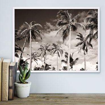 Poster 'Palmen unter kalifornischem Himmel' 30x40 cm schwarz-weiss