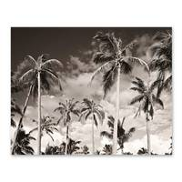 Poster 'Palmen unter kalifornischem Himmel' 40x50 cm Motiv Natur – Bild 2