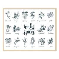Poster 'Herbs and Spices' 40x50 cm Kräuter Gewürze Küchenbild – Bild 5