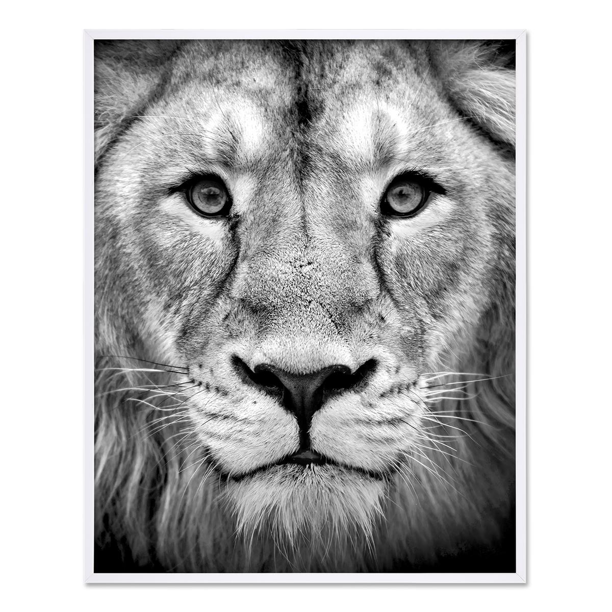 poster 'lion' 40x50 cm motiv natur landschaft design löwe