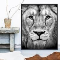 Poster Lion 40x50 cm Motiv Natur Landschaft Design Löwe Afrika