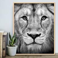 Poster 'Lion' 40x50 cm Motiv Natur Landschaft Design Löwe Afrika – Bild 5