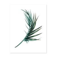 Poster 'Palmenblatt' 30x40 cm Motiv Natur Landschaft Palme – Bild 2