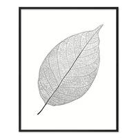 Design-Poster 'Blatt' 40x50 cm schwarz-weiss Natur Zeichnung – Bild 3