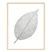 Design-Poster 'Blatt' 40x50 cm schwarz-weiss Natur Zeichnung – Bild 6