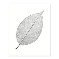 Design-Poster 'Blatt' 40x50 cm schwarz-weiss Natur Zeichnung – Bild 2