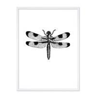 Design-Poster 'Libelle' 30x40 cm schwarz-weiss Zeichnung Insekt – Bild 4