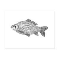 Design-Poster 'Karpfen' 30x40 cm schwarz-weiss Fisch Zeichnung Koi – Bild 2