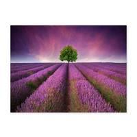 Poster 'Lavendel' 30x40 cm Motiv Natur Landschaft Foto Blumenwiese – Bild 2