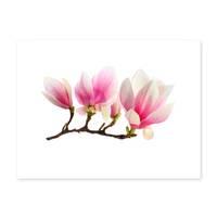 Poster 'Magnolienzweig' 30x40 cm Motiv Magnolia Blume Natur Foto – Bild 2