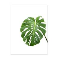 Poster 'Monstera Blatt' 30x40 cm Natur Foto Pflanze Fensterblatt – Bild 2