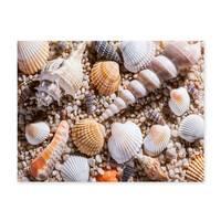 Poster 'Muscheln' 30x40 cm Strandbild Natur Landschaft Maritim – Bild 2