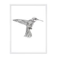 Design-Poster 'Kolibri' 30x40 cm schwarz-weiss Vogel Zeichnung – Bild 5