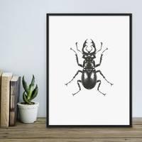 Design-Poster Käfer 30x40 cm schwarz-weiss Motiv Zeichnung Insekt