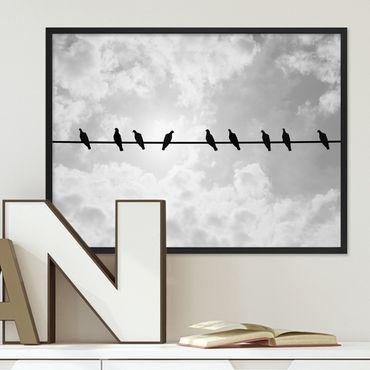 Poster 'Tauben' 30x40 cm schwarz-weiss Natur Vögel Foto Himmel