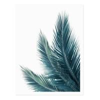 Poster 'Kokosblätter' 30x40 cm Foto Küchenmotiv Abstrakt – Bild 2