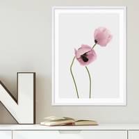 Poster Mohnblumen 30x40 cm Foto Küchenmotiv Botanisch