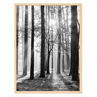 Poster 'Wald Sonne' 30x40 cm schwarz-weiss Foto Bäume Sonnenschein – Bild 6